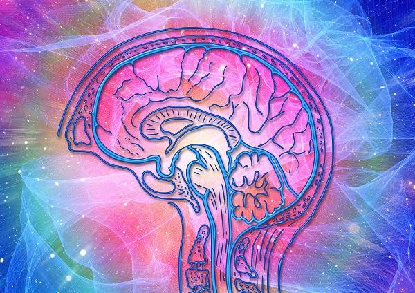brain wave gr