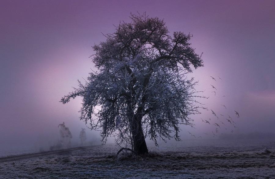 tree-2286510_1920-1920x1255-eyva-life_fc3ef047d0d02b569b071c1d7cc92430